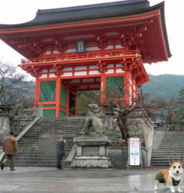 京都・清水寺の「ペット(犬・猫)」を連れて入場できる?周辺にペットと入店できるお店は??
