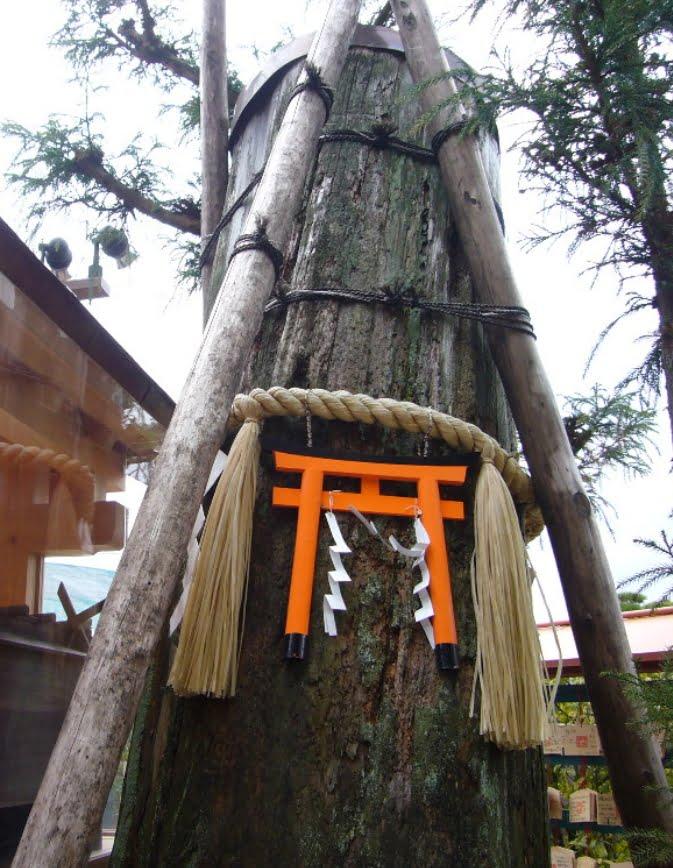 京都・清水寺・地主神社いのり杉