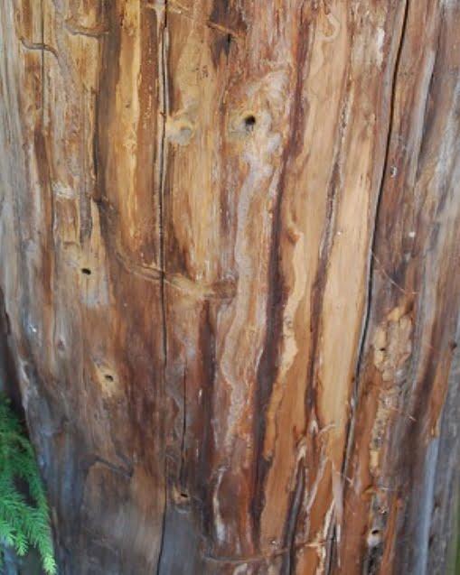 地主神社・いのり杉の穴・画像・写真